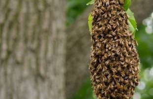 How to tell if a Beehive is Active