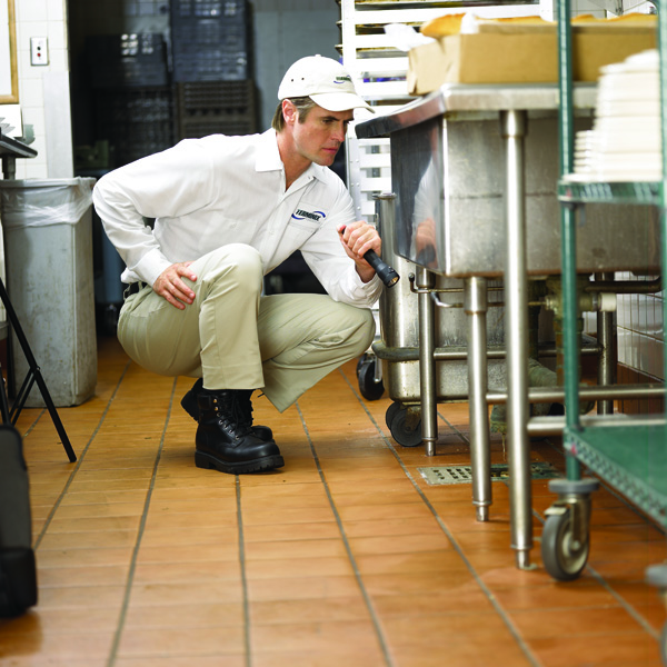 Commercial Kitchen pest control inspection
