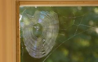Remove Spider Eggs