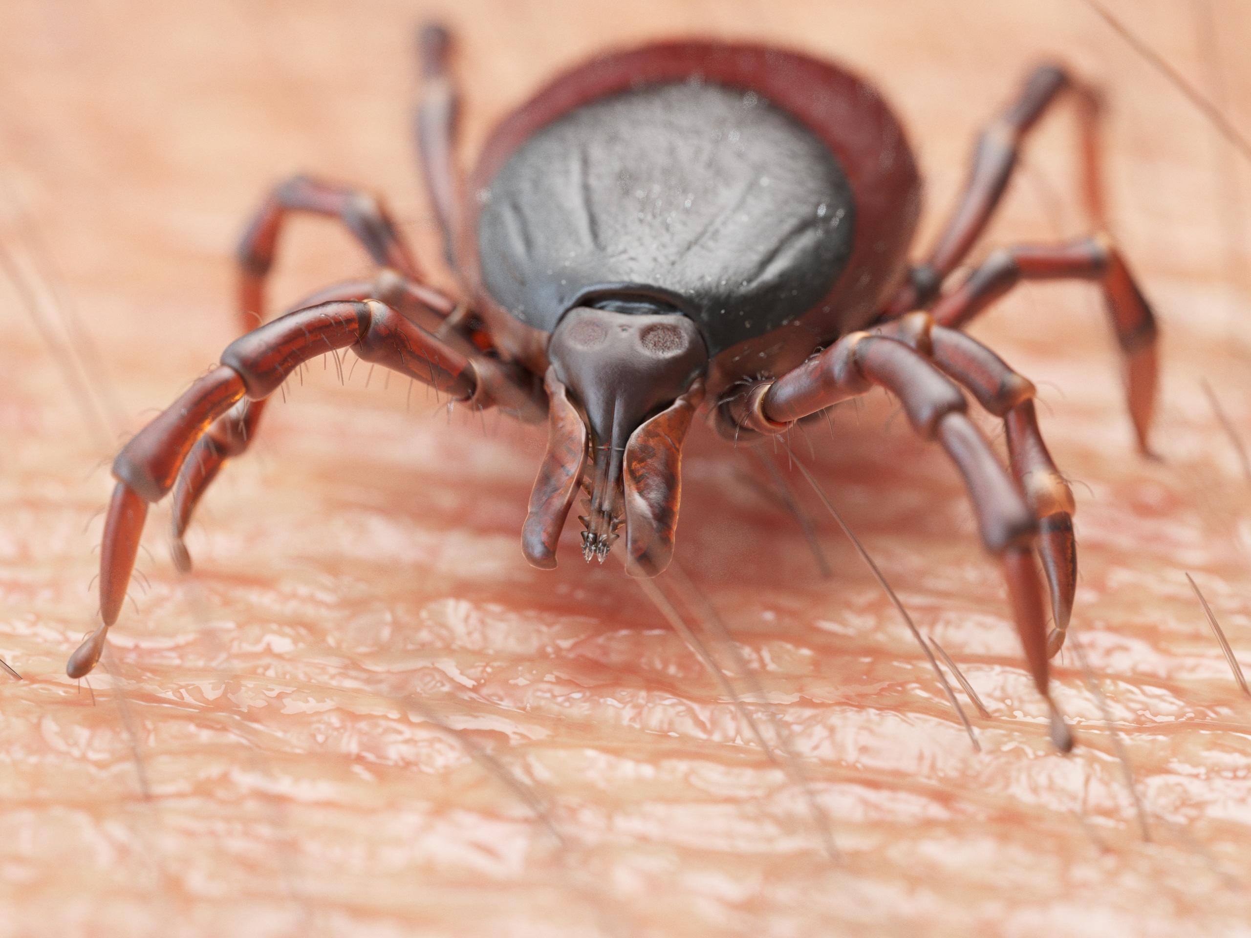 Tick exterminators